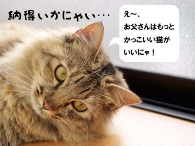 cat1704