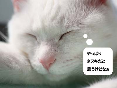 cat1705