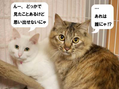 cat1706