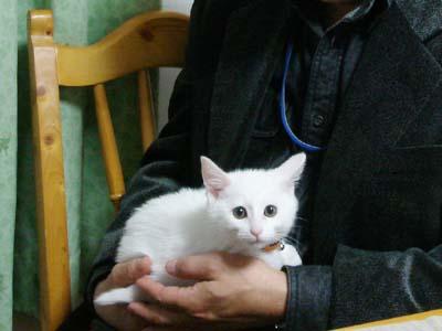 cat1707