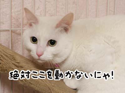 cat1708