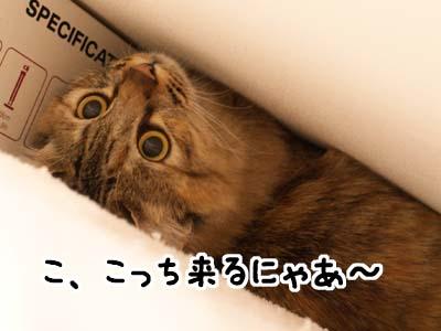 cat1709