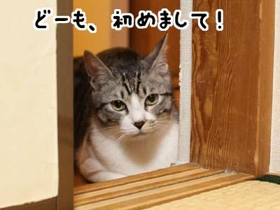 cat1710