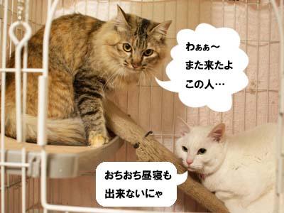 cat1719