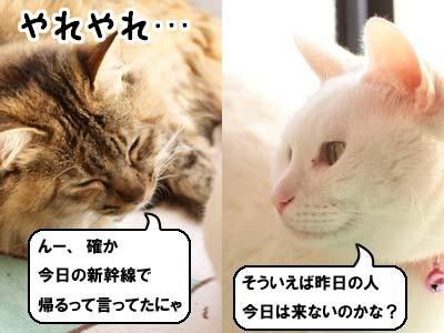 cat1727