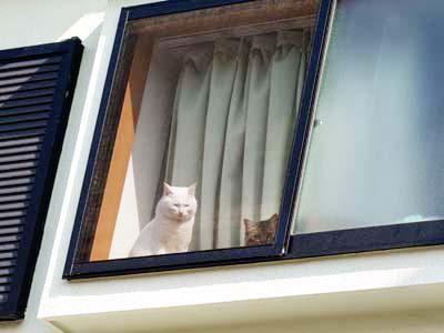 cat1728