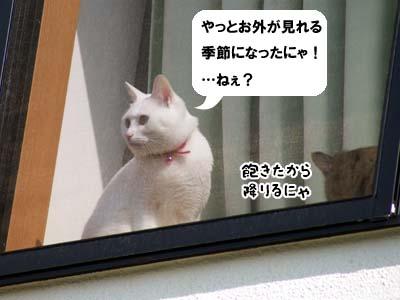 cat1729