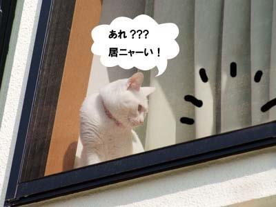 cat1730