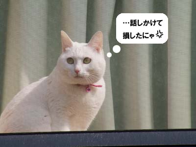 cat1731