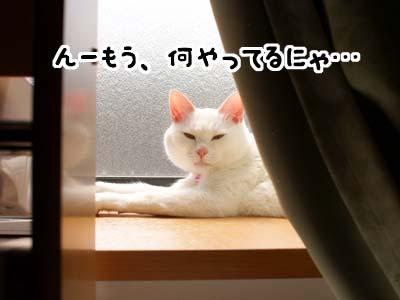 cat1733