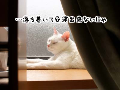 cat1734