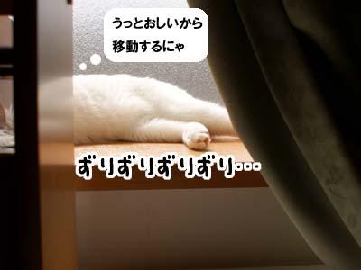 cat1735