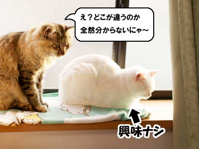 cat1740