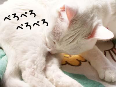 cat1741