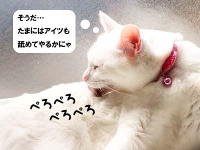 cat1742