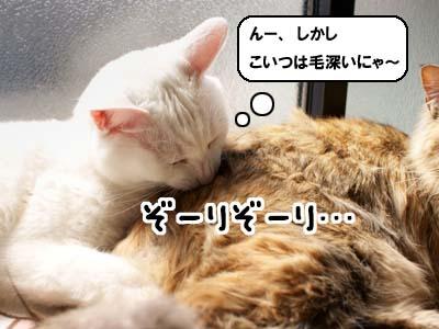 cat1743