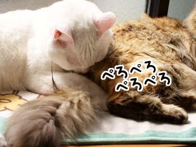 cat1744