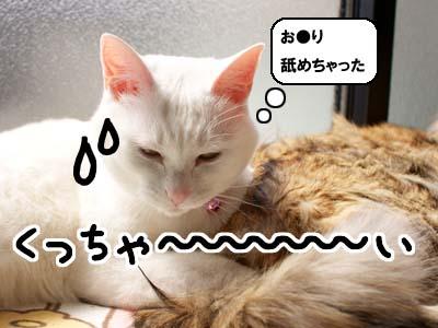 cat1745