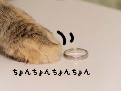 cat1747