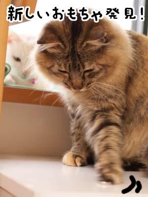 cat1748