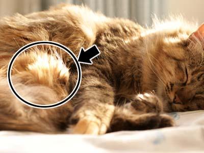 cat1754