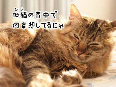 cat1755