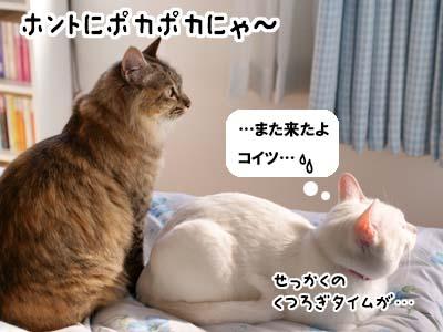cat1757