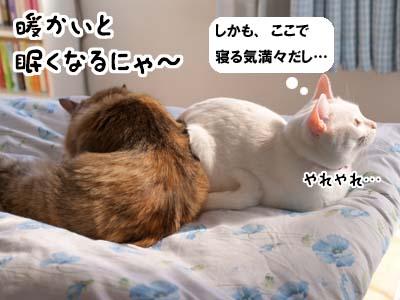 cat1758