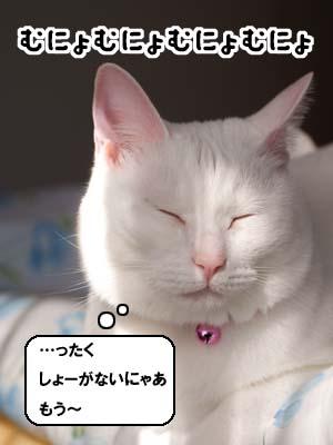 cat1759