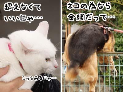 cat1763