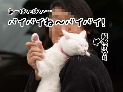 cat1764
