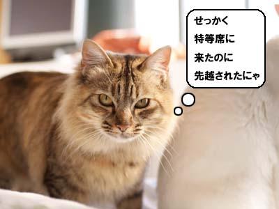 cat1767