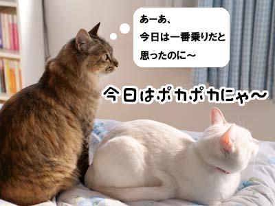 cat1768