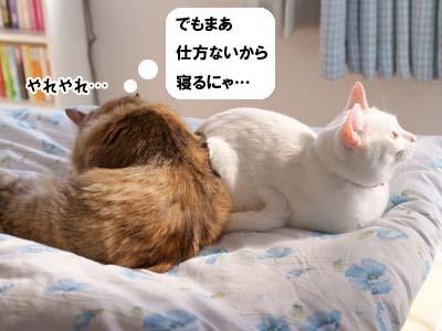 cat1769