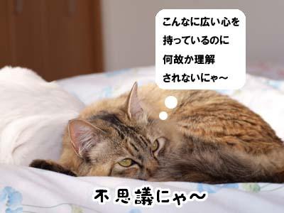 cat1770