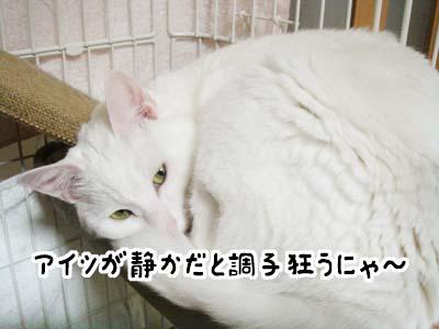 cat1773