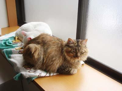 cat1774