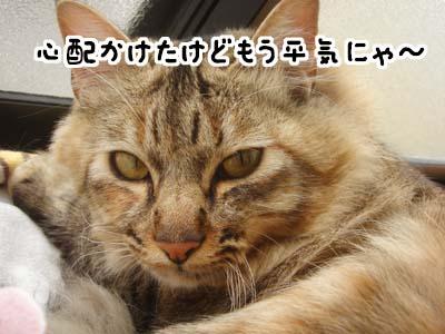 cat1775