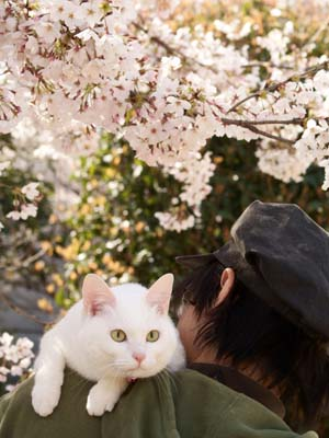 cat1776