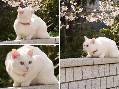 cat1777