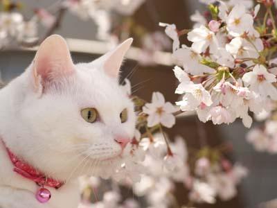 cat1778