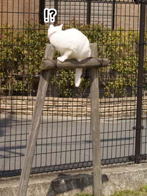 cat1779