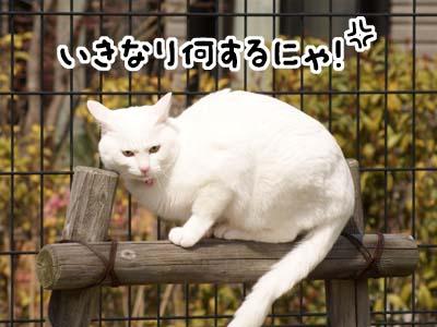 cat1780