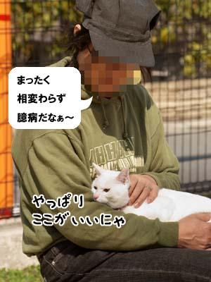 cat1781