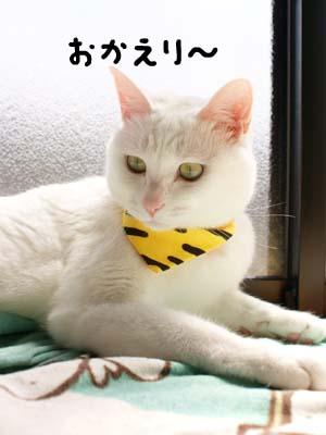 cat1788