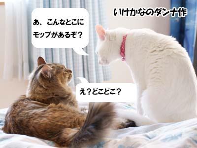cat1794