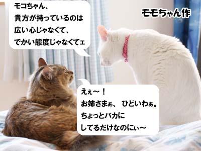 天下の珍猫「まゆげ猫 桃太郎の日記」
