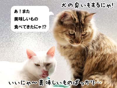 cat1805