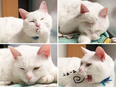 cat1807