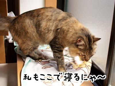 cat1808